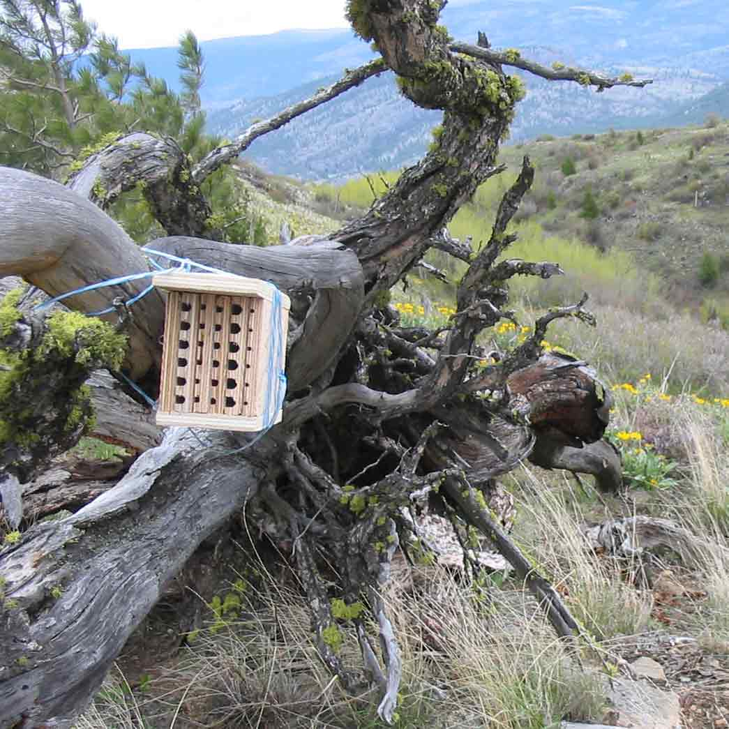 a bee trap in a tree