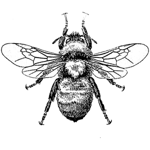 line drawing of a bee